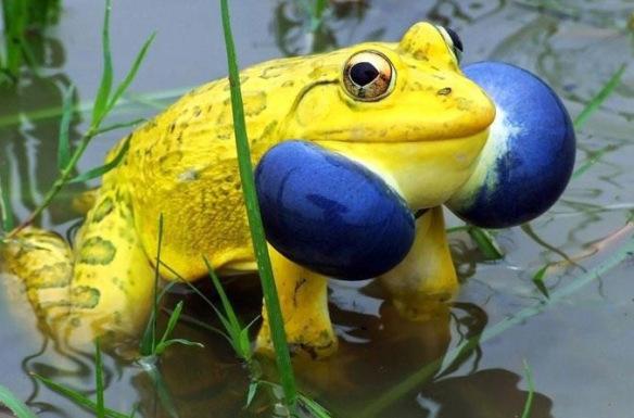 Bu zamana kadar görmediğiniz en garip hayvan ve bitkiler 13