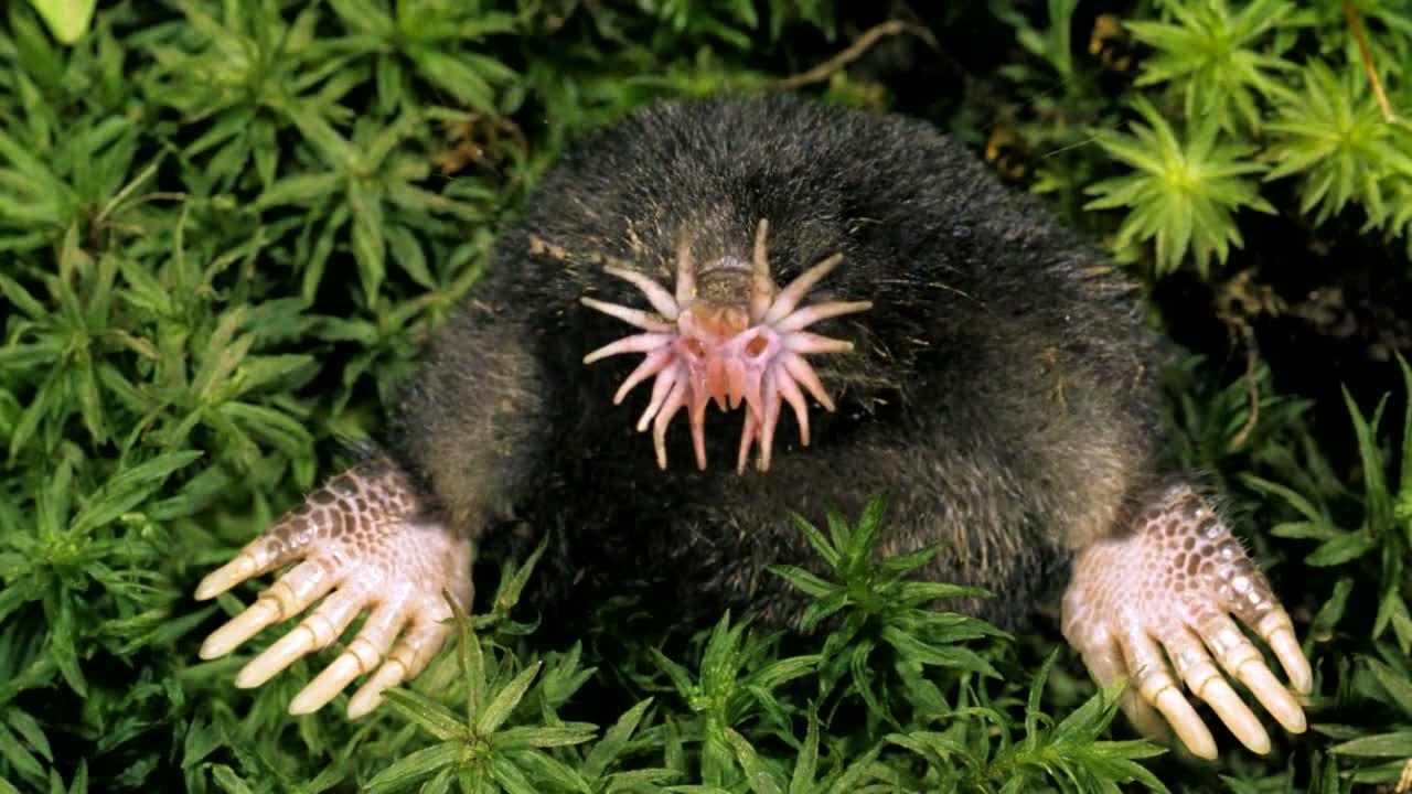 Bu zamana kadar görmediğiniz en garip hayvan ve bitkiler 15