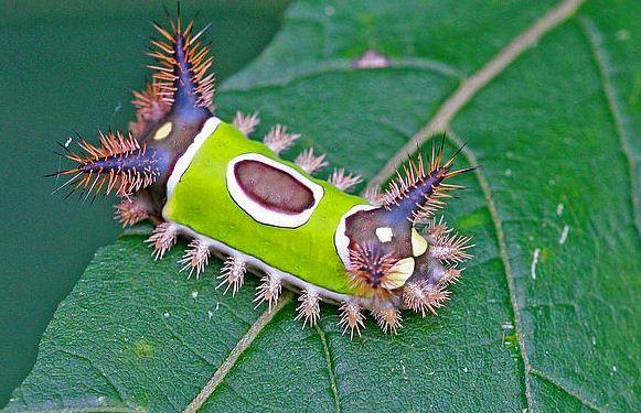 Bu zamana kadar görmediğiniz en garip hayvan ve bitkiler 2