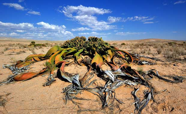 Bu zamana kadar görmediğiniz en garip hayvan ve bitkiler 27