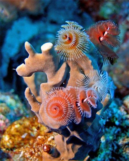 Bu zamana kadar görmediğiniz en garip hayvan ve bitkiler 31