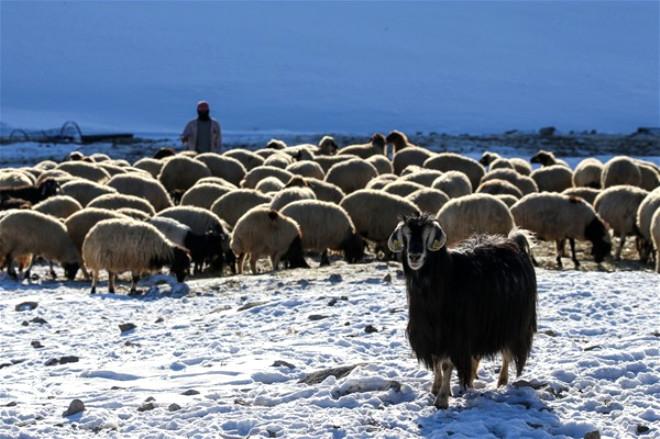 Doğuda Kış Manzaraları 9