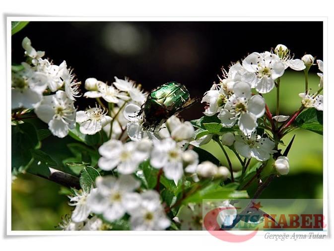 Türkiye'nin Yaban Çiçekleri 1