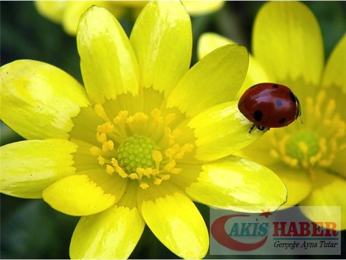 Türkiye'nin Yaban Çiçekleri 10