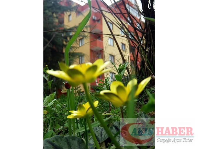 Türkiye'nin Yaban Çiçekleri 2