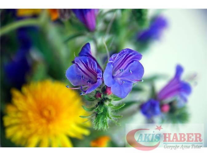 Türkiye'nin Yaban Çiçekleri 3