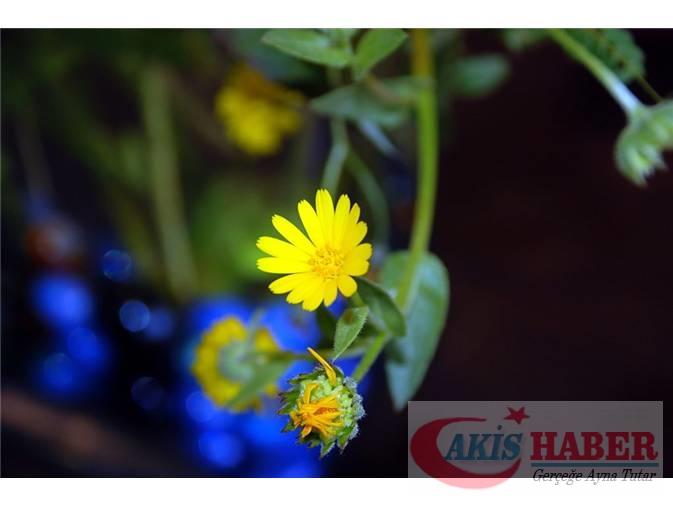 Türkiye'nin Yaban Çiçekleri 6