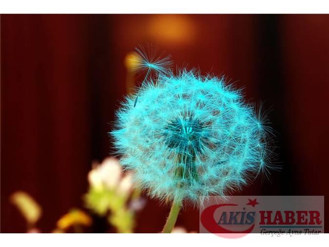 Türkiye'nin Yaban Çiçekleri 9