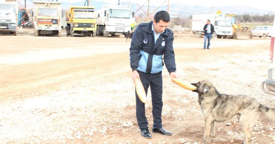 Çal Belediyesi Başıboş Köpekleri Kısırlaştırdı