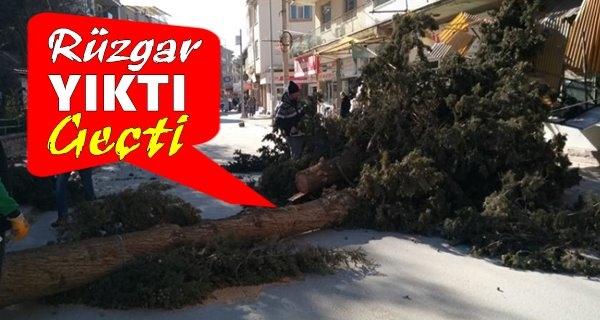 Fırtına Çivril'de Ağaçları Kökünden Söktü
