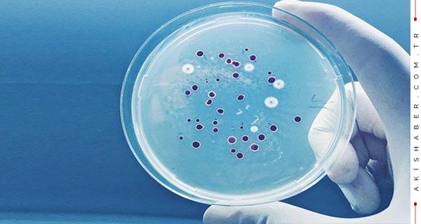 Yeni Bir Antibiyotik Familyası Bulundu