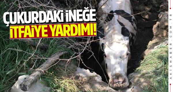 Denizli'de itfaiyeden inek kurtarma operasyonları!
