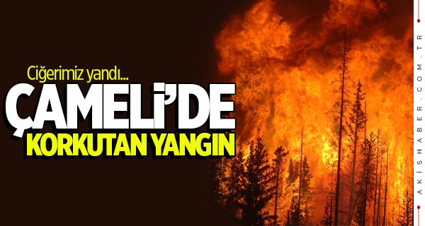 Çameli'nde korkutan orman yangını!