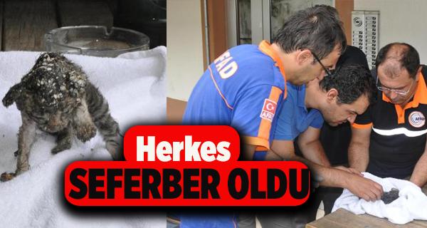 Pamukkale'de Kedi Kurtarma Operasyonu