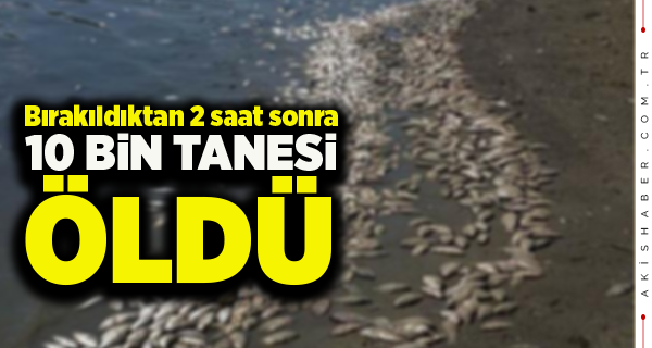 Çivril'de Binlerce Balık Telef Oldu