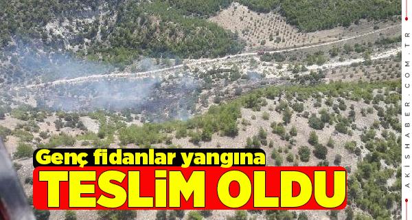 Pamukkale'de 5 Dekarlık Alan Yandı
