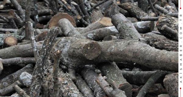 8 Tonluk Ağaç Hırsızlığı İsyan Ettirdi