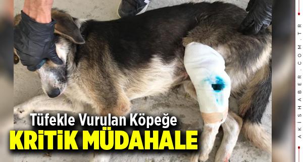 Çivril'de Vicdansızlar Köpeği Tüfekle Vurdu