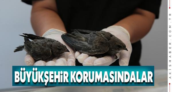 Nadir Görülen Kuşu Büyükşehir Sahiplendi