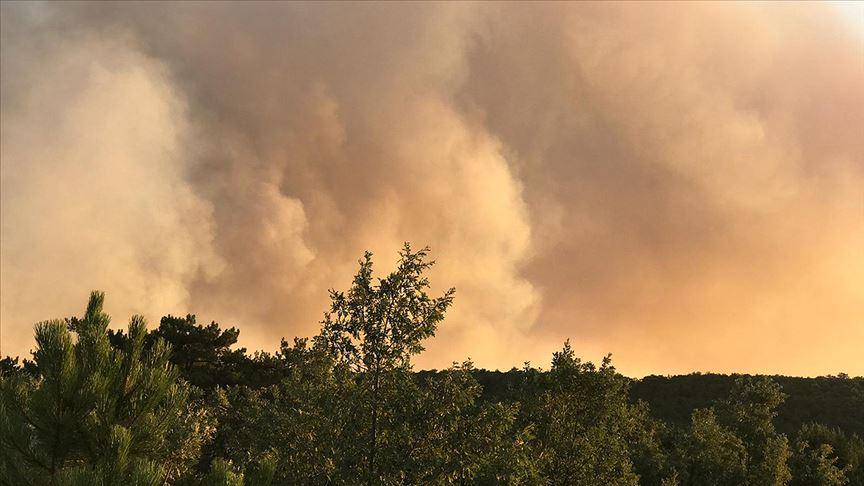 Bir orman yangını da Eskişehir'de