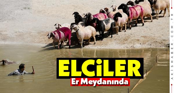 Sudan Koyun Geçirme Yarışmasında Büyük Heyecan
