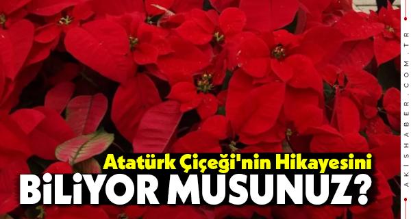 Atatürk Çiçeği'nin Hikayesini Biliyor Musunuz?