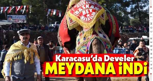 Karacasu 2. Deve Güreşi Festivali Şenlik Havasında Yapıldı