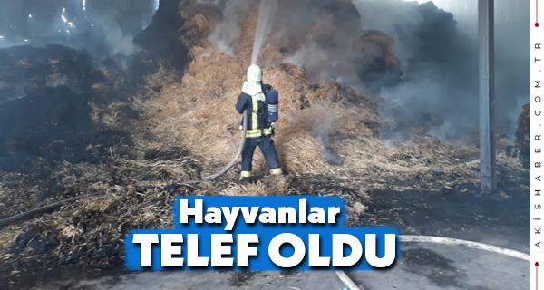 Denizli'de Çiftlikte Çıkan Yangın Büyük Zarara Yol Açtı