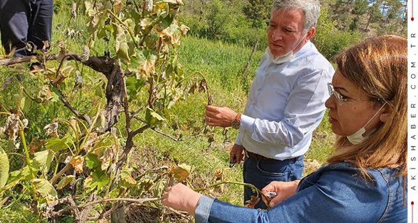 Denizli'de 3500'ün Üstünde Çiftçi Zarar Gördü