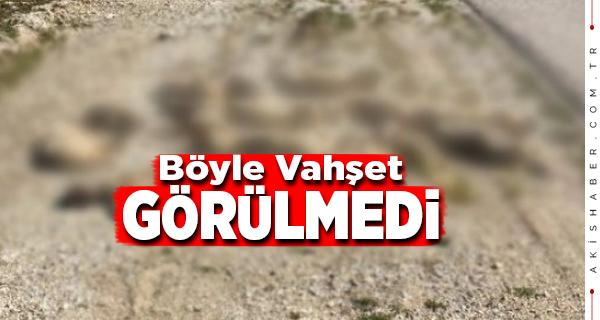 Bozkurt'ta Çok Sayıda Köpeği Öldürdüler