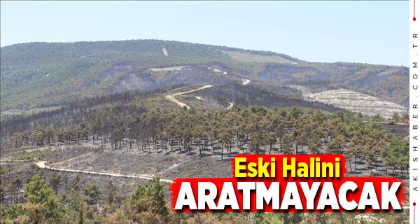 Sarayköy'de Büyük Yangın Sonrası Fidanlar Boy Atıyor