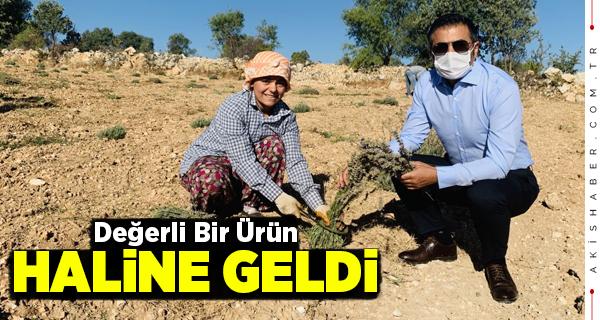 Başkan Erdoğan Üreticinin Sevincine Ortak Oldu