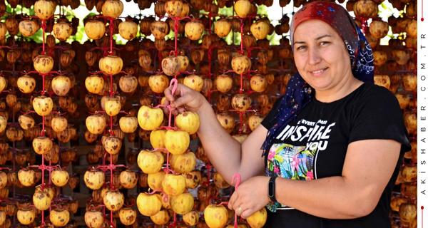 Denizli'de Şifa Dolu Cennet Elmalarının Hasadına Başlandı