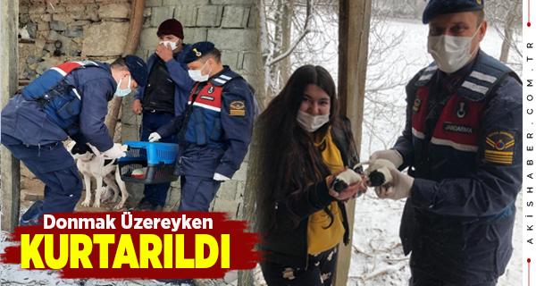 Denizli'de Mahsur Kalan Köpekleri Jandarma Kurtardı