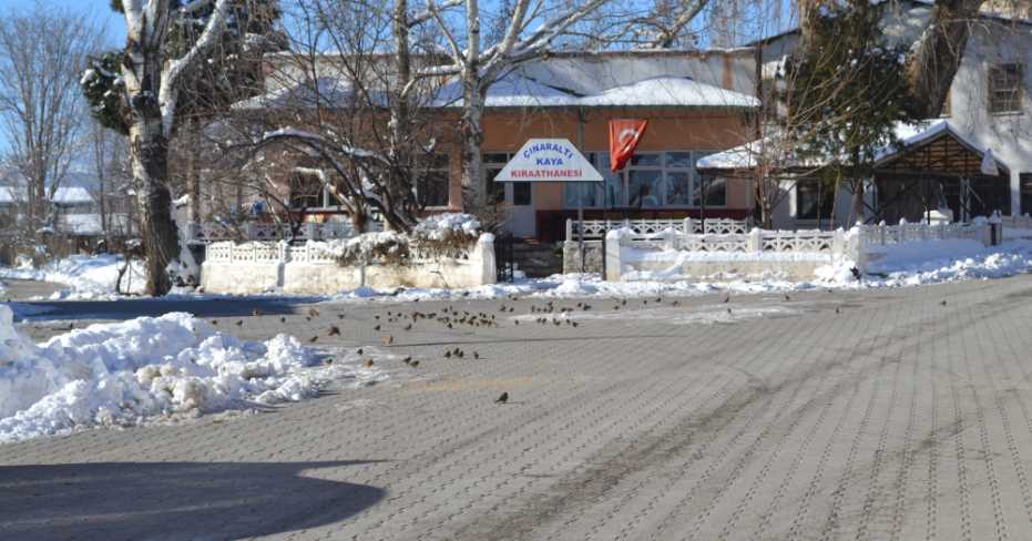 Dazkırı Belediyesi Kuşları Aç Bırakmadı!