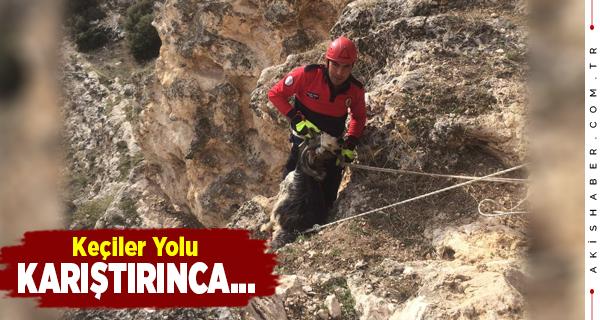 Denizli'de Mahsur Kalan Keçiler Kurtarıldı
