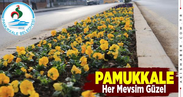 Pamukkale Kış Çiçekleriyle Güzelleşiyor