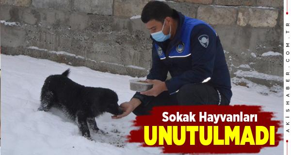 Çameli Belediyesi'nden Sokak Hayvanlarına Destek