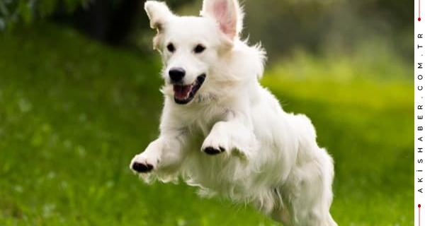 Köpekler kaç yıl yaşar?