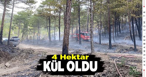 Denizli'de Orman Yangını 3 Saatte Söndürüldü