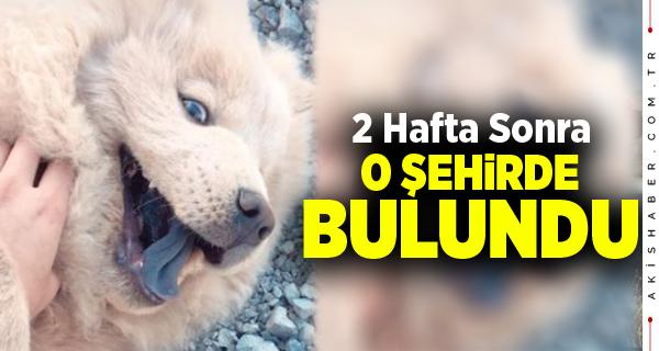 Denizli'de 18 Bin TL Ödüllü Kayıp Köpek Bulundu