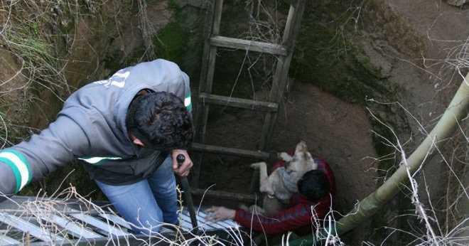 Su Sondaj Kuyusuna Düşen Köpeği İtfaiye Kurtardı