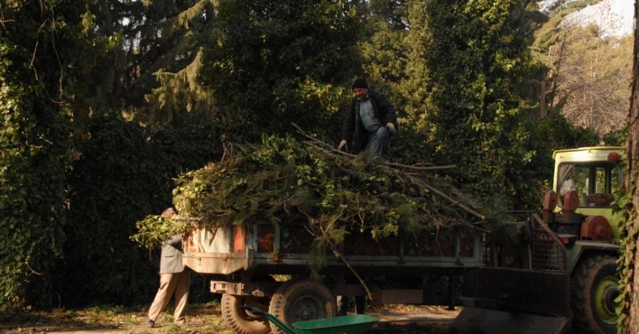 Kar Denizli'de Binlerce Kıızılçam Ağacına Zarar Verdi