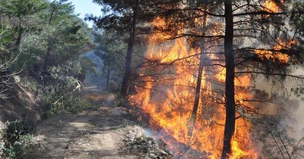 Piknik Ateşi 4 Hektarlık Ormanı Yo Etti