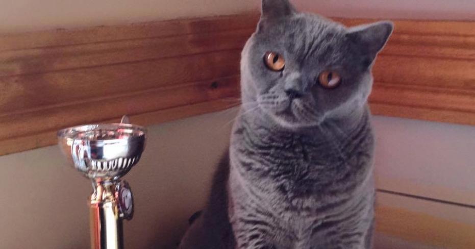 Denizlili Kedi 'Şans' Türkiye'ye Birincilik Getirdi