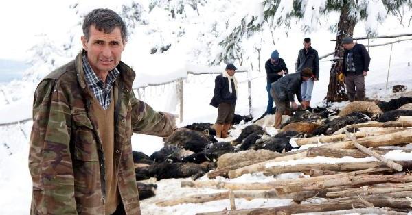 Babadağ'da Ağıl Çatısı Çöktü, 70 Hayvan Telef