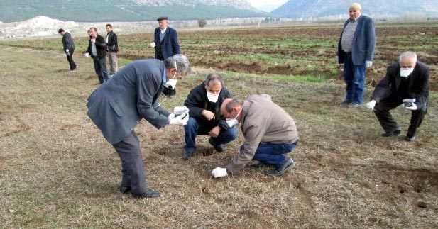 Zehir Buğdayla tarla farelerine çözüm